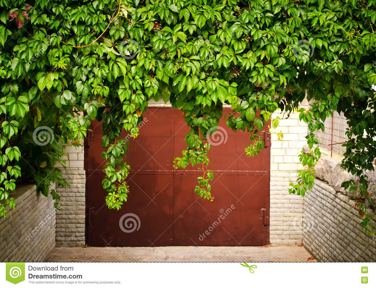 Fall grape leaves stock image 29992465 - The splendid transformation of a vineyard in burgundy ...