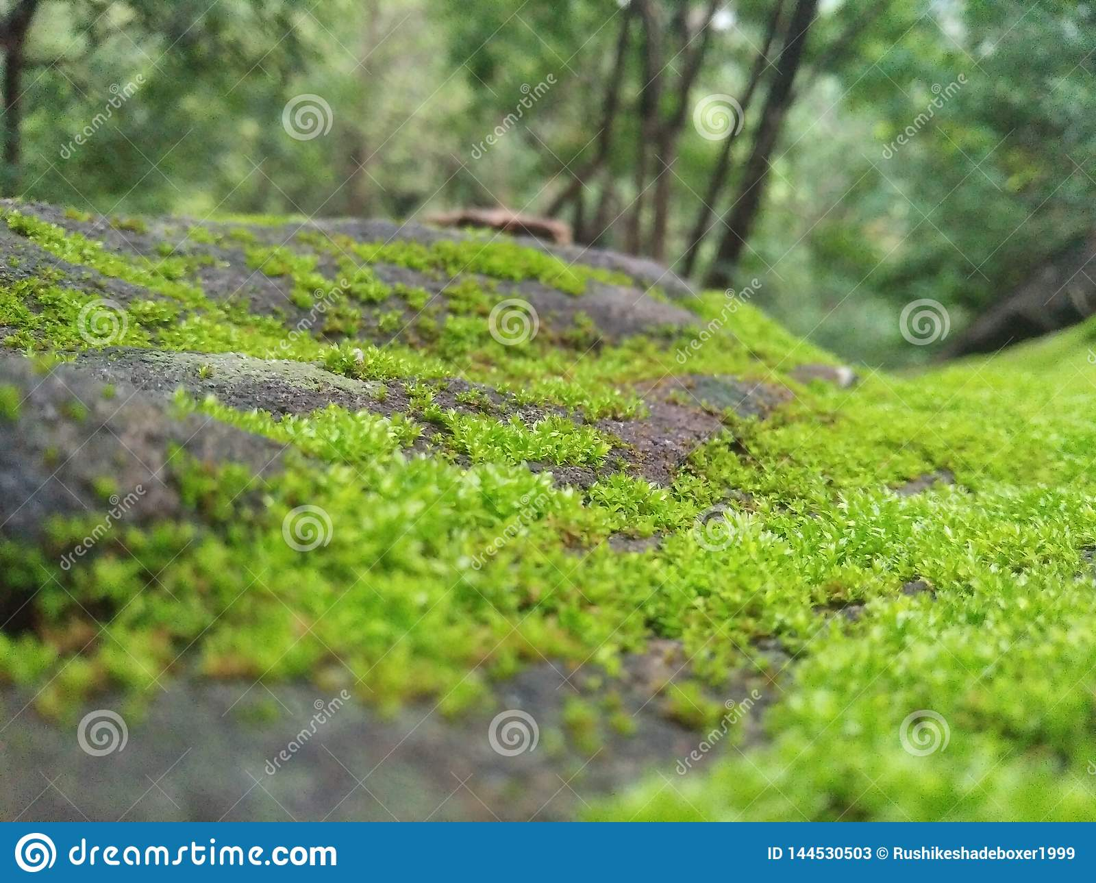The green grass appear on the HARD ROCK STONE