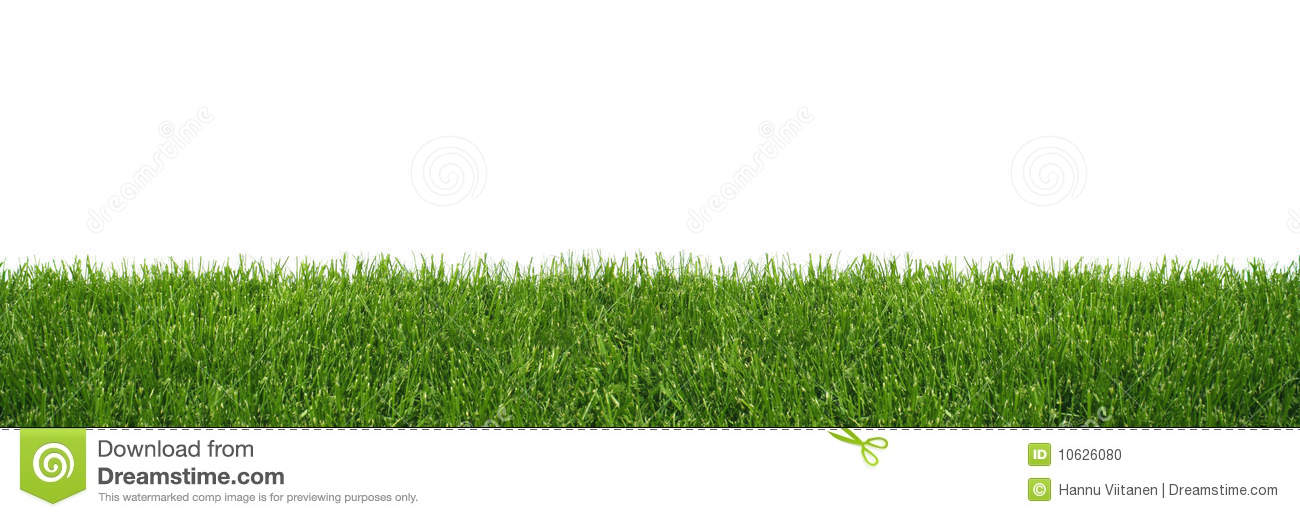 Green Grass Background Stock Photo Image 10626080