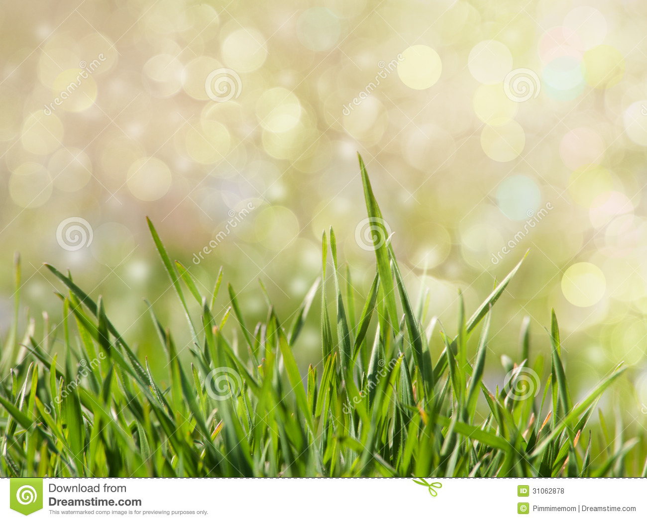 green grass background with dreamy bokeh stock photo - image of