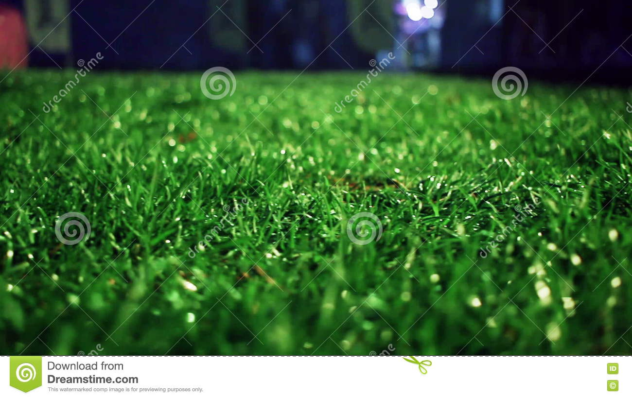 green grass soccer field. Green Grass Background. Stadium Night. Soccer Field  Stock Video - Of Grass, Lawn: 73485281 Green Grass Soccer Field