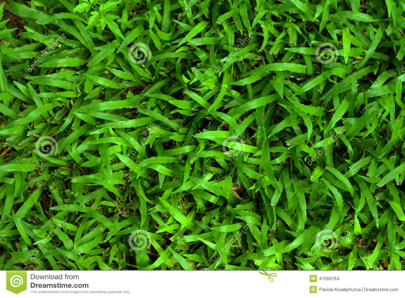 an analysis of the green green grass Green, green grass  crystals have a stunning resemblance to grass, thus,  an analysis of the demand for skill in a growing economy.