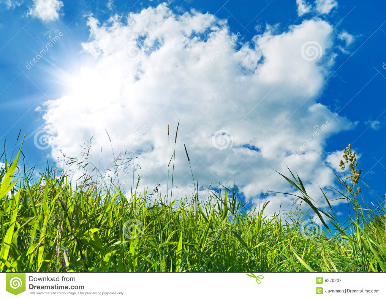 Green Grass And Blue Sky Background Royalty Free Stock ...