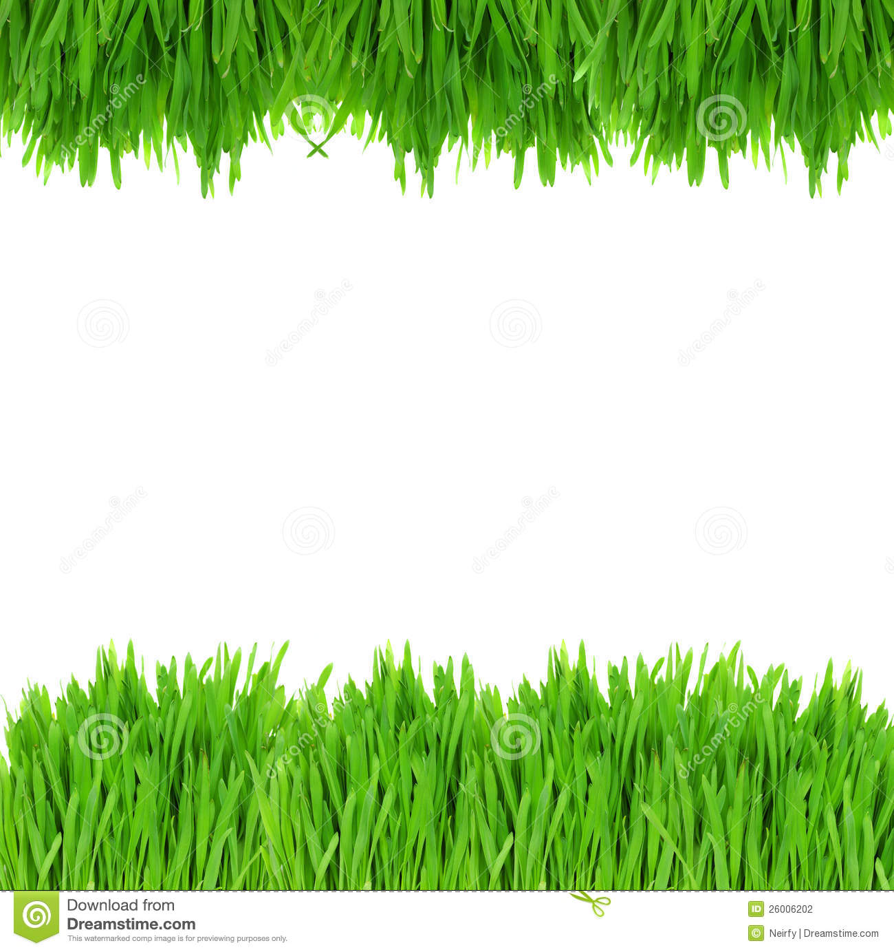 Green grass border stock photo image of environmental for Best grasses for borders
