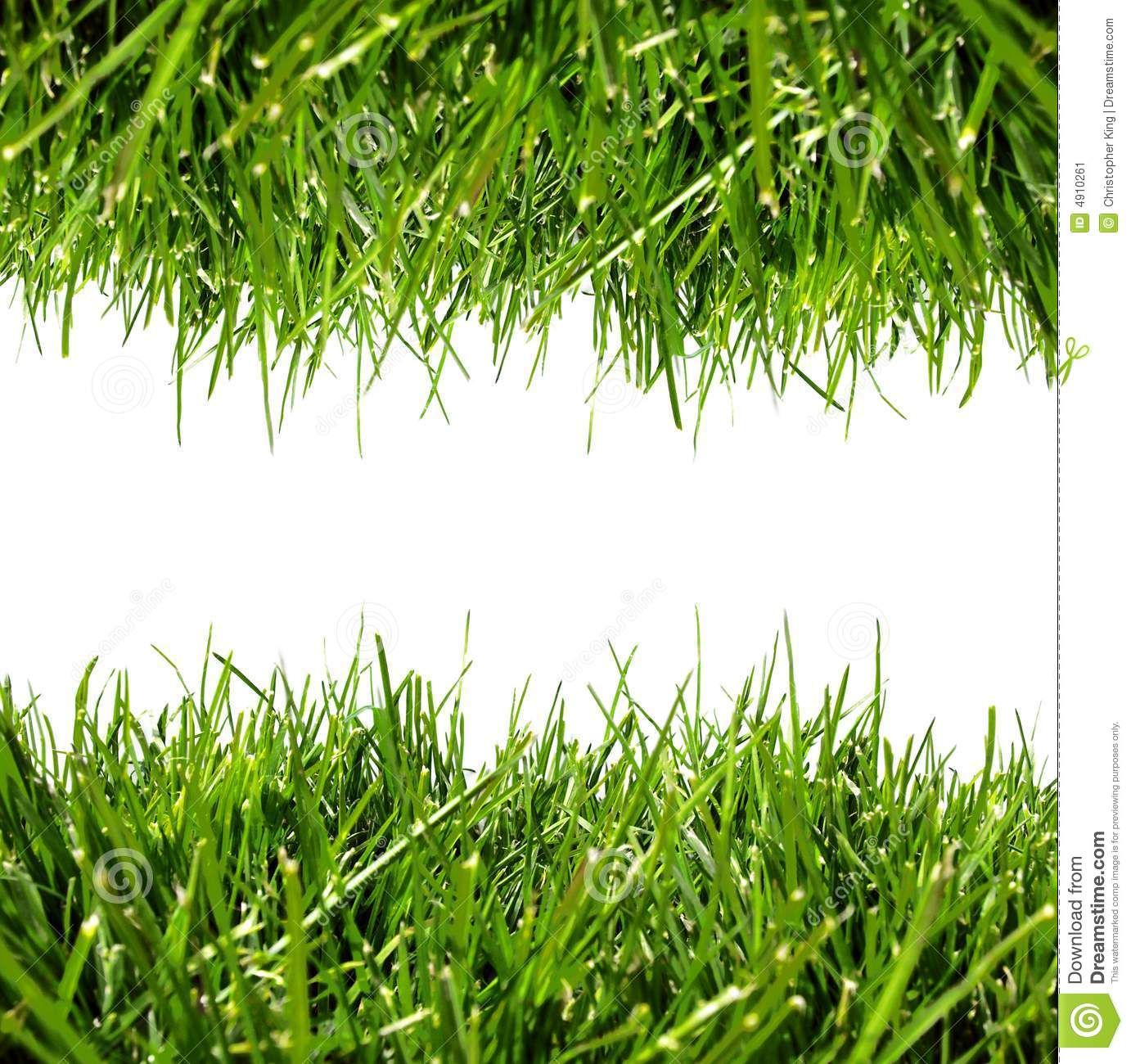 Green grass border on white stock image image 4910261 for Best grasses for borders