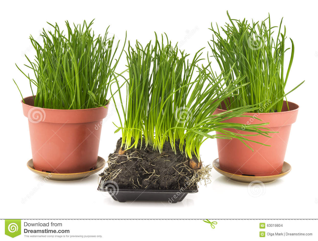 Green grass in brown pot soil stock photo image 63019804 for Soil and green
