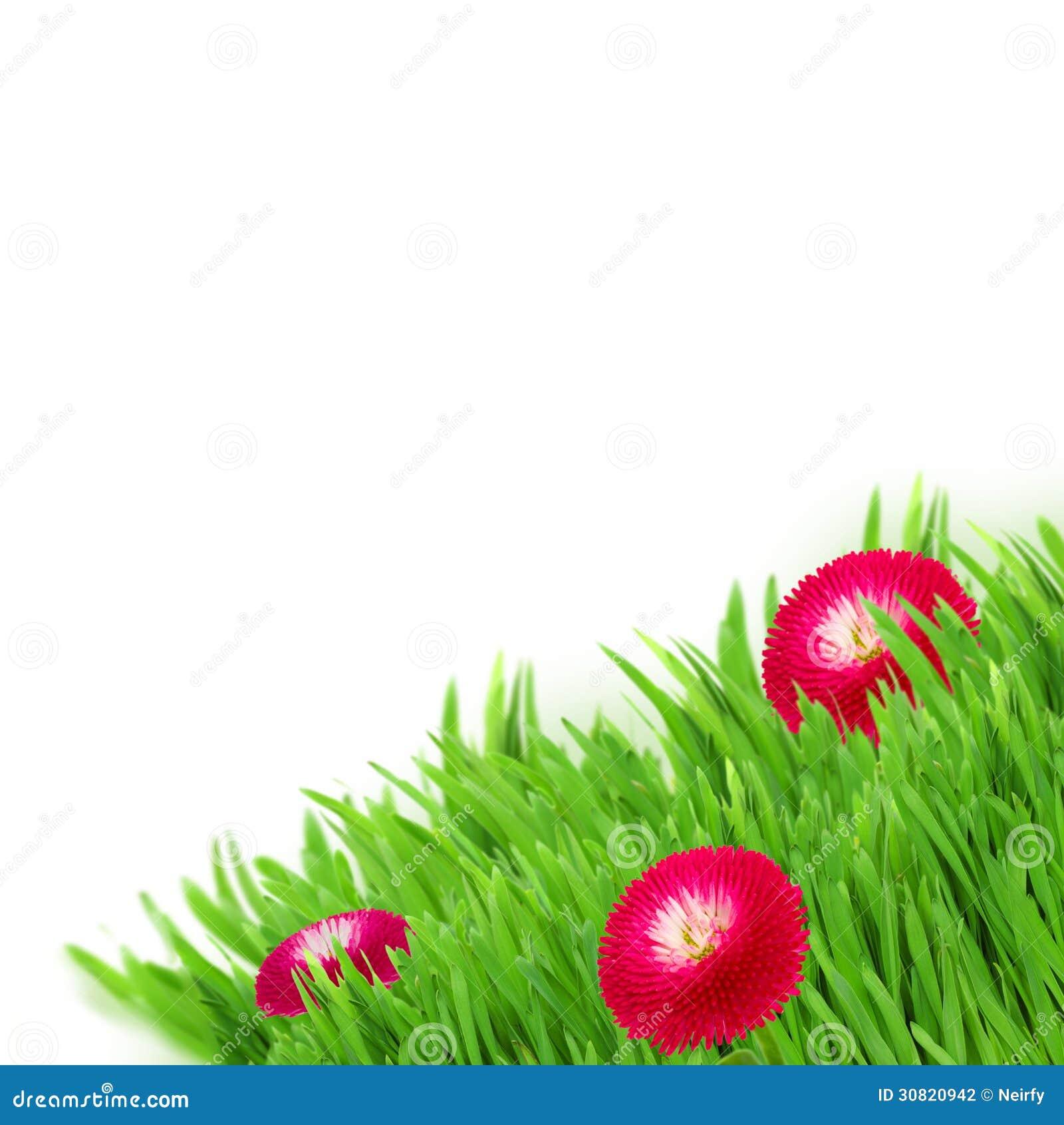 Green grass with daisy flowers border stock photo 30820942 megapixl green grass with daisy flowers border izmirmasajfo