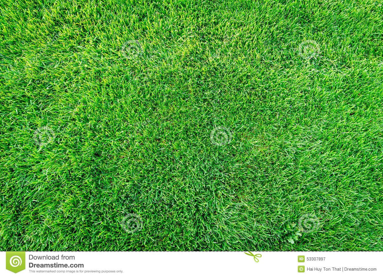 Green Grass Field Background Texture Pattern Stock Photo