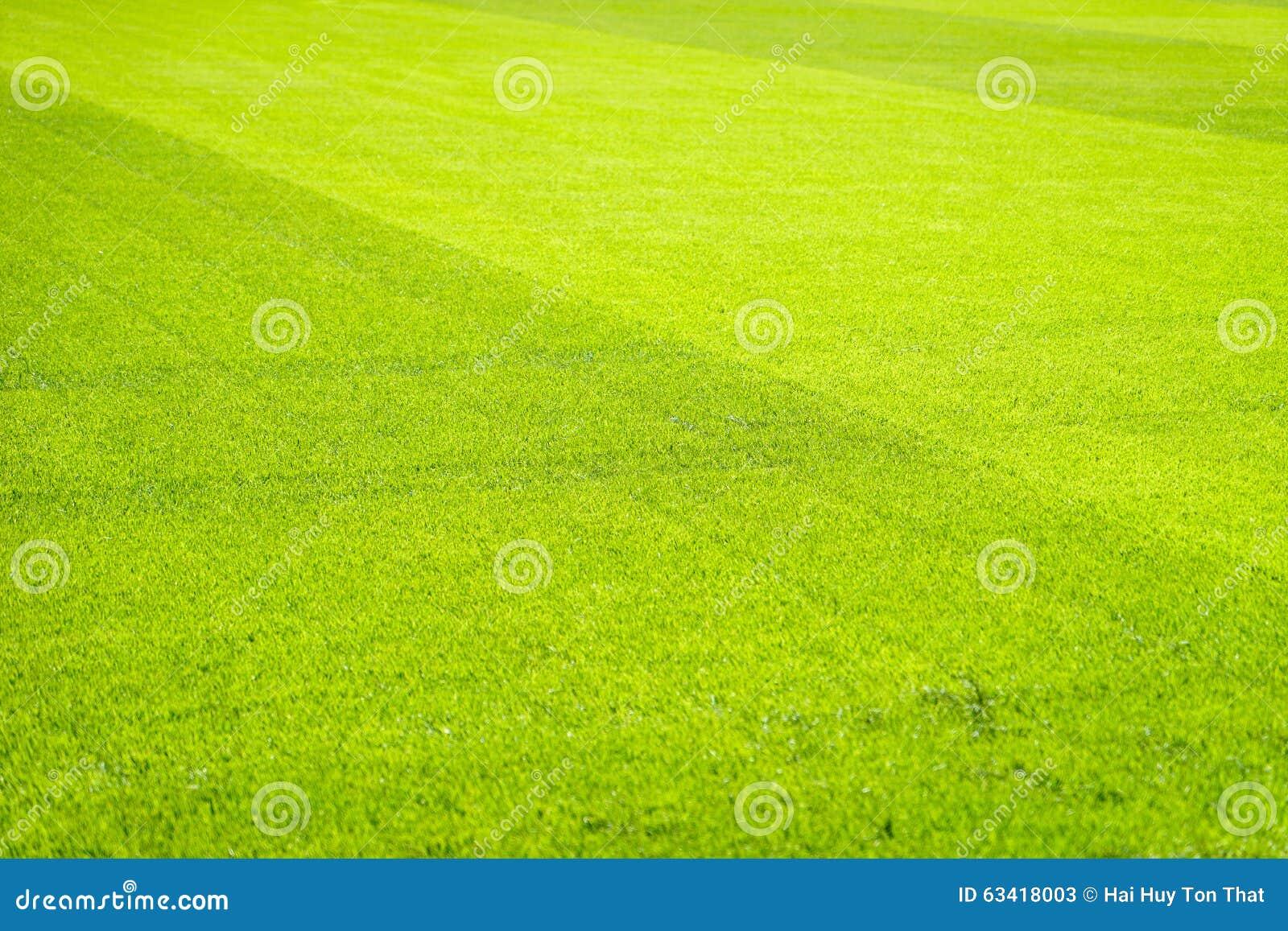 green grass field background texture pattern stock image