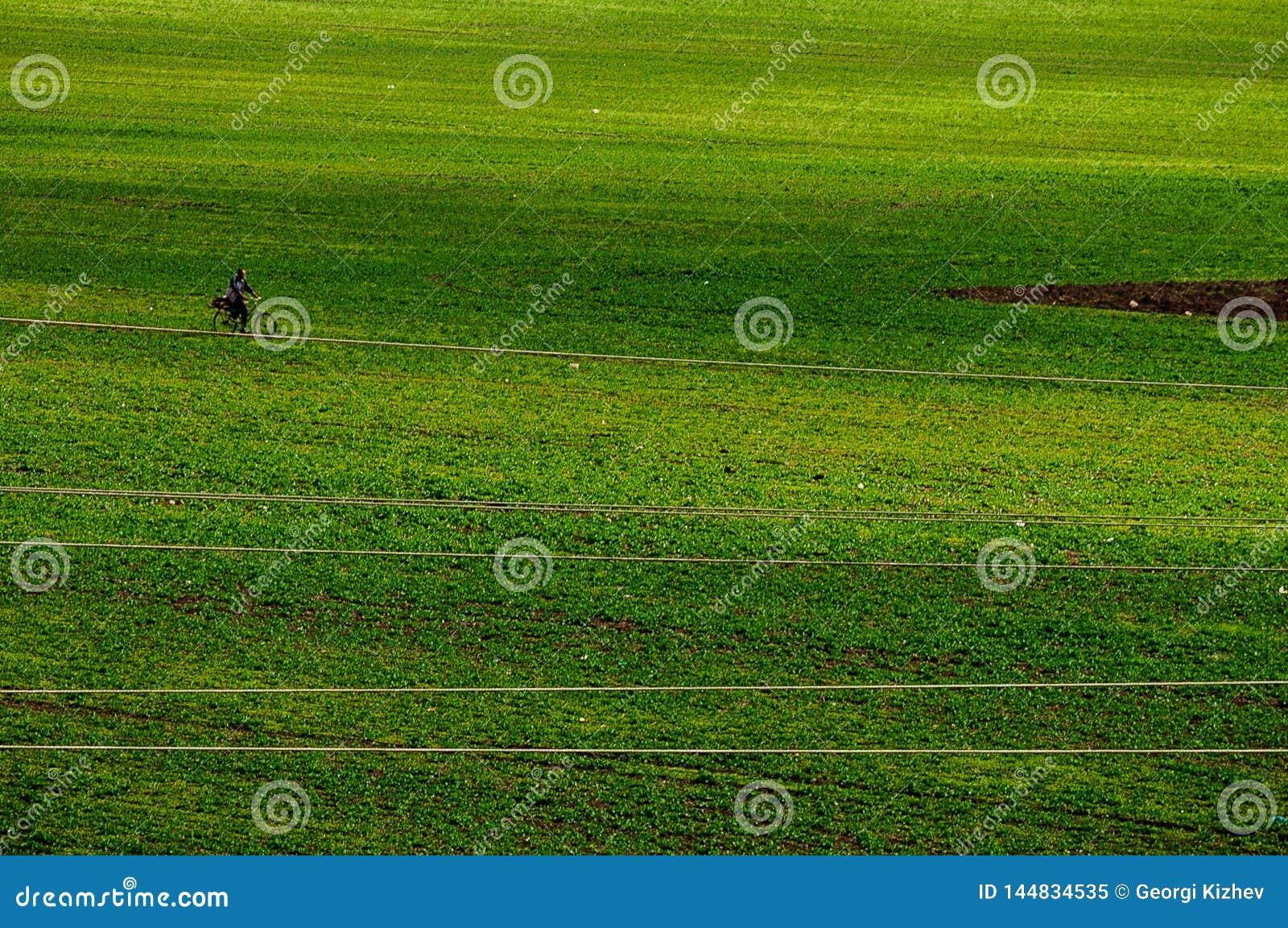 Green grass field with a biker
