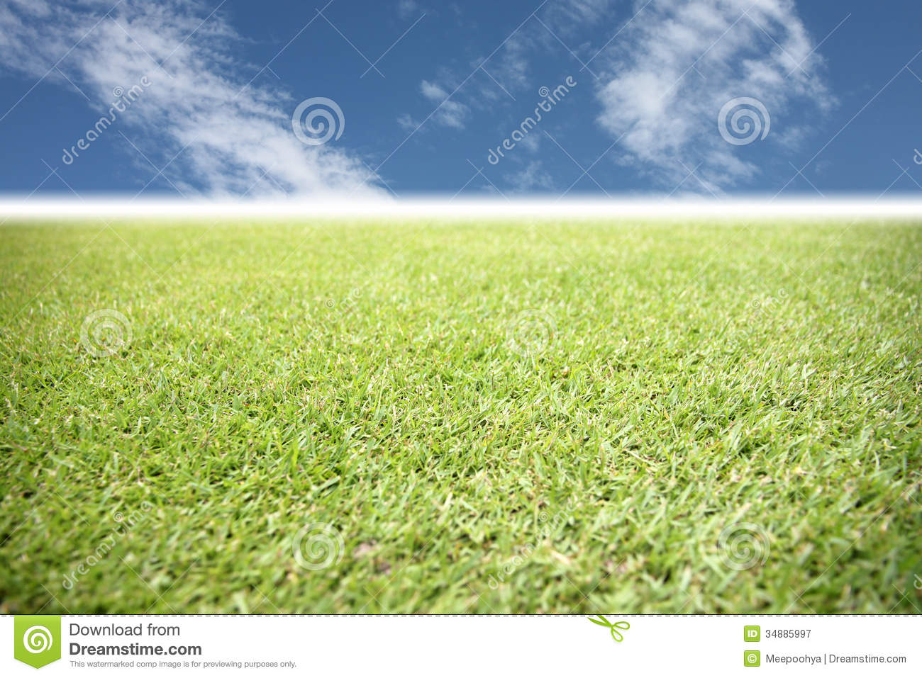 Green grass in the garden on blue sky royalty free stock for Blue grasses for the garden