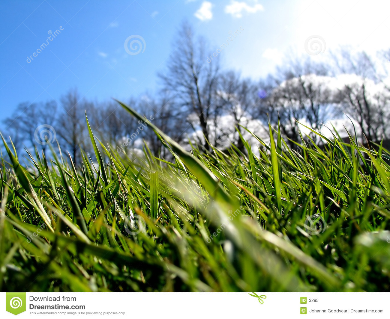 Green Grass II