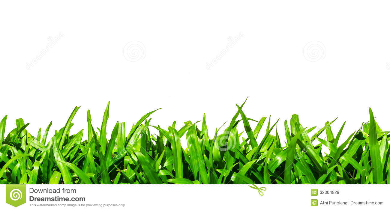 Grass Turf Pictures, Images and Stock Photos - iStock