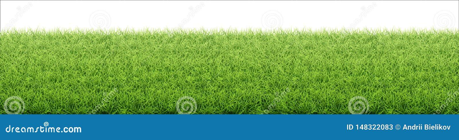 Green grass lawn. Border from fresh grass field.