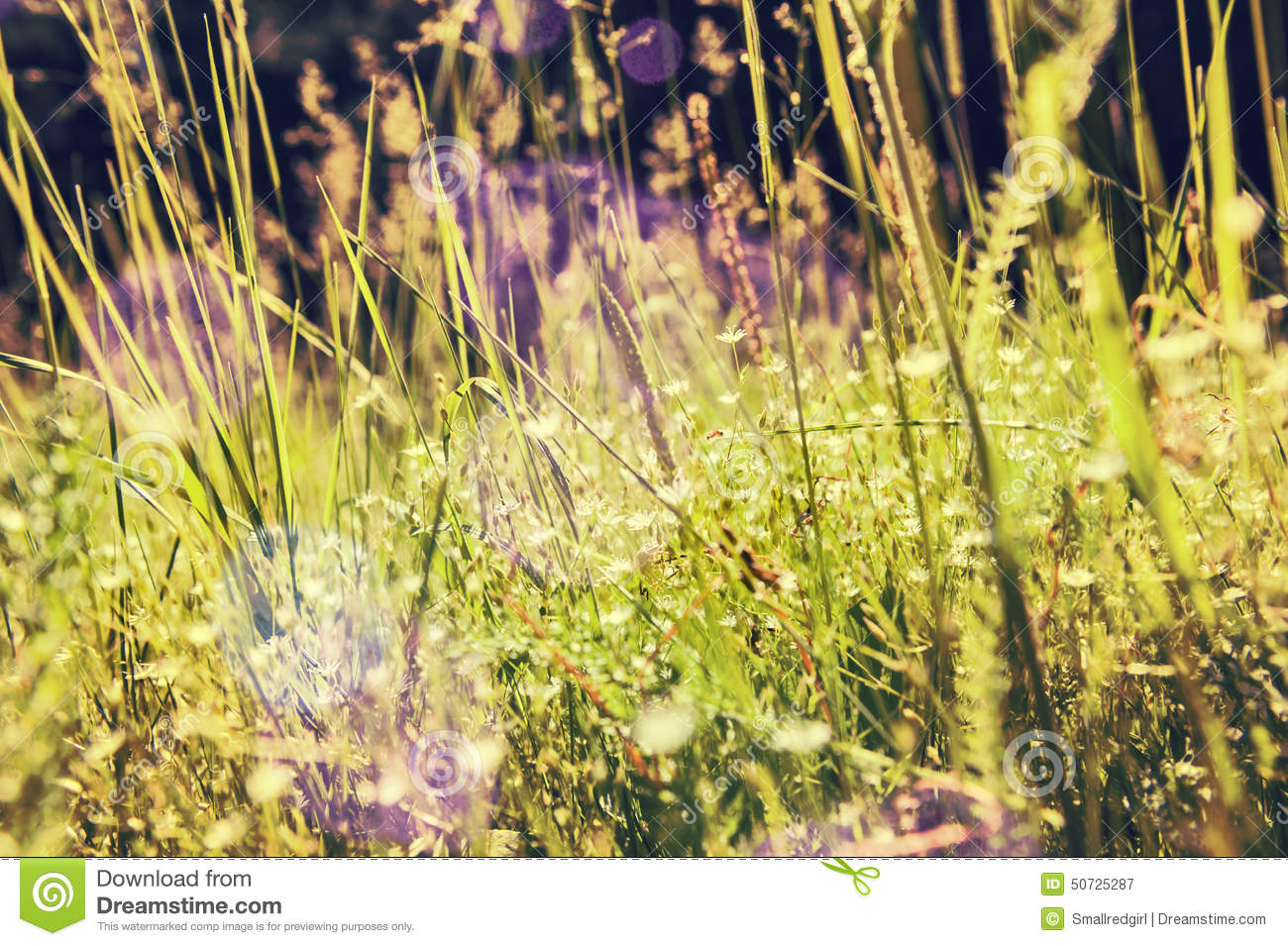 Vintage Photo Of Grass: Green Grass And Little White Flowers On The Field Stock