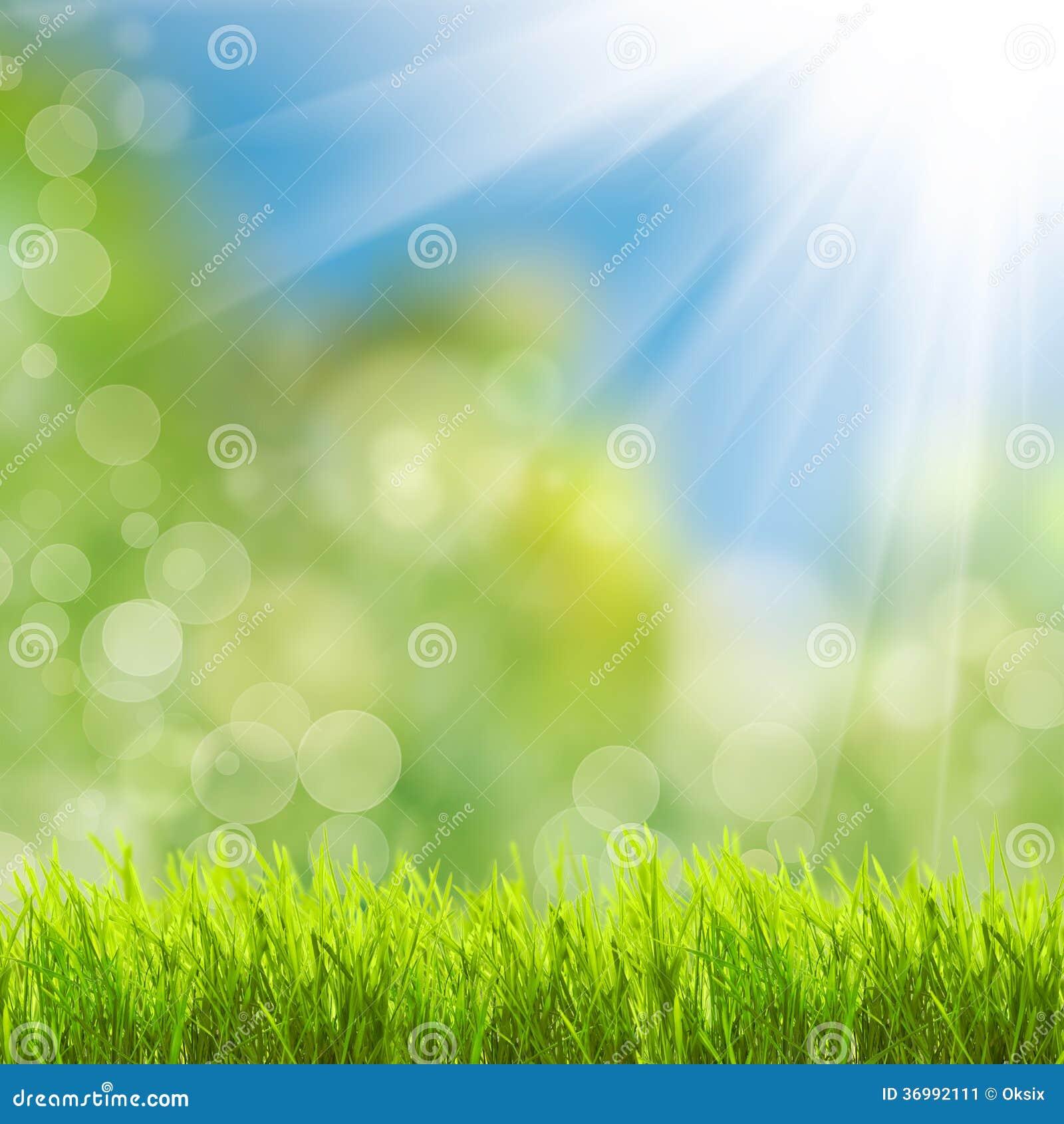 Green Grass Over Sunlight Stock Image Image 36992111