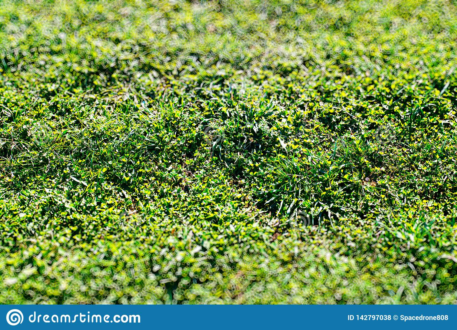 Green Grass In Park Texture Bokeh Background Stock Photo Image Of Textured Abstraction 142797038