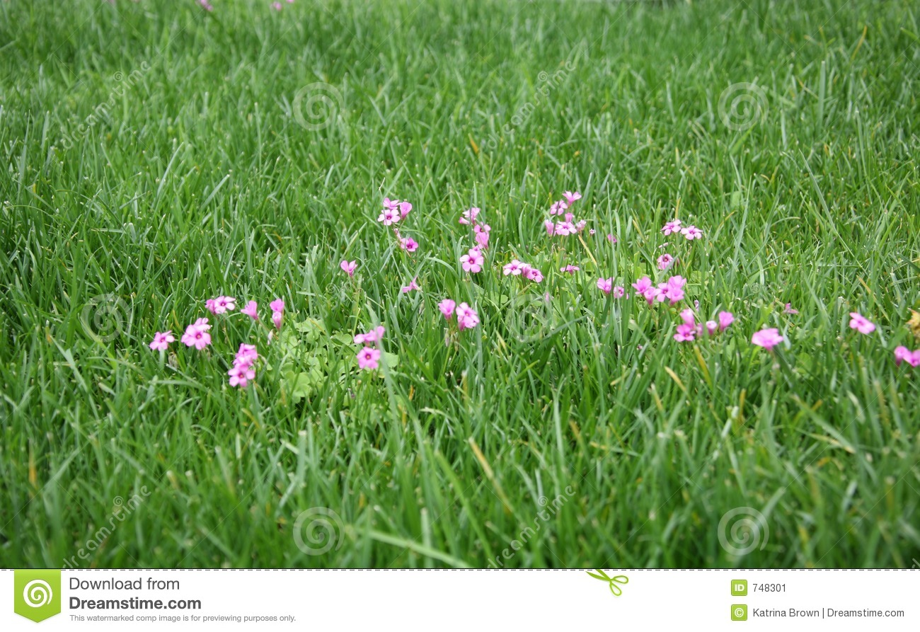 Green grass with pink flowers stock image image of football green grass with pink flowers mightylinksfo Gallery