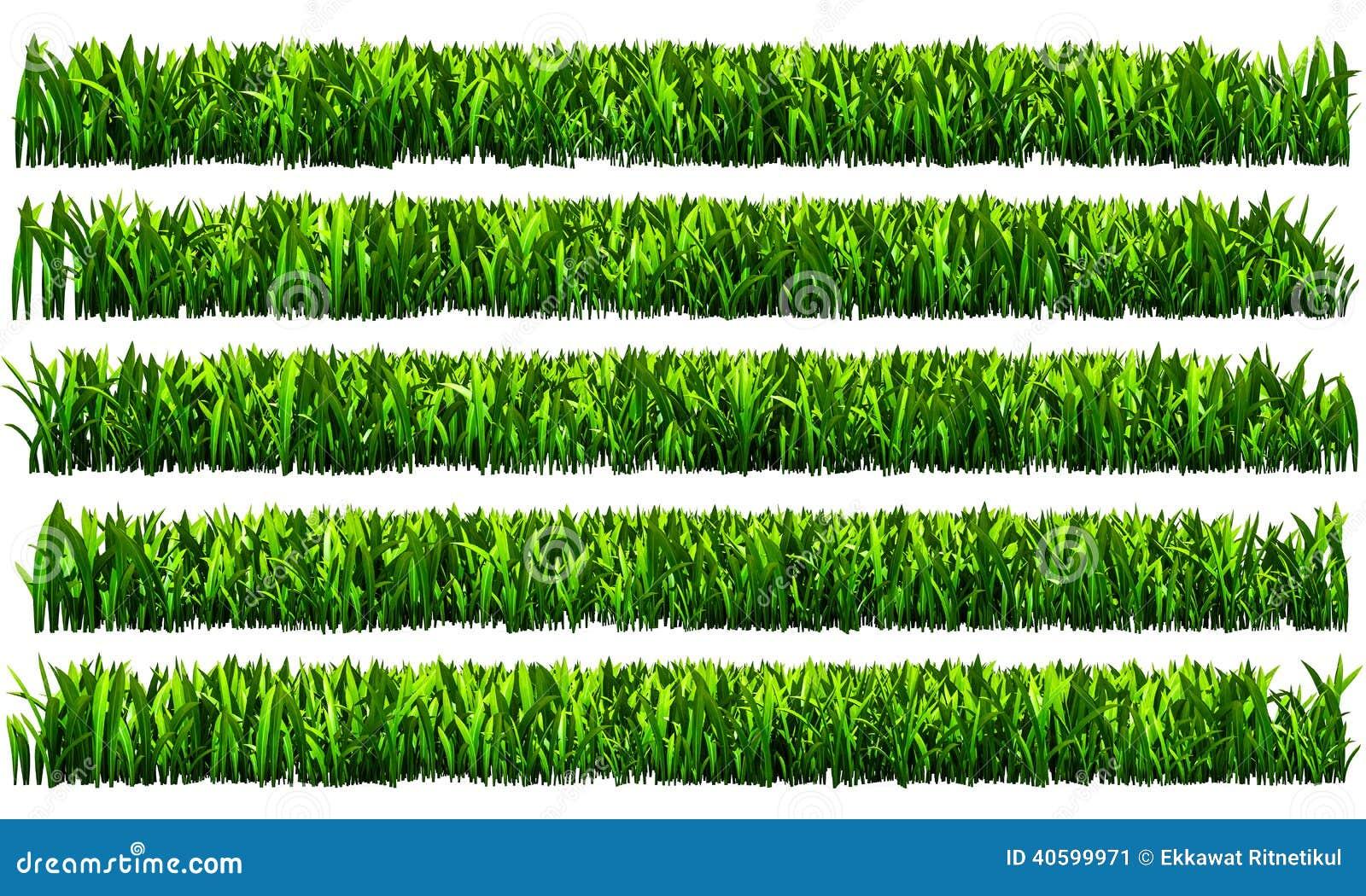 Green Grass Png Transparent Background Stock Illustration