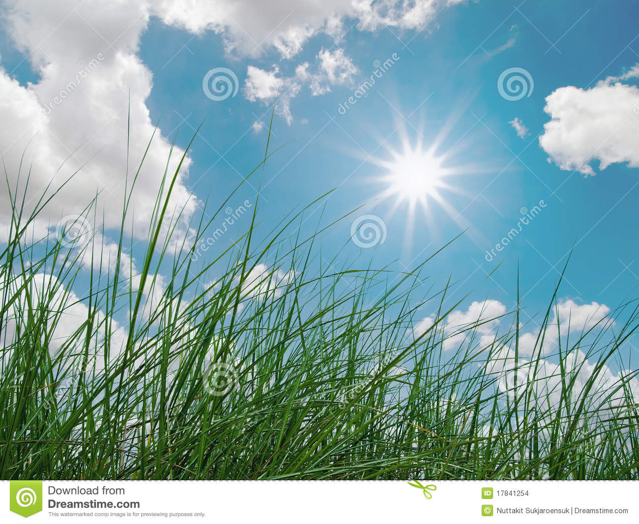 Green Grass, Sky, Clouds And Sun Stock Photo - Image of ...