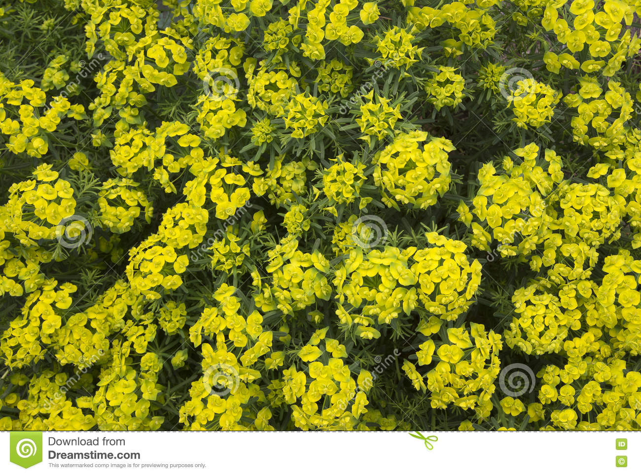 Small Yellow Flowers In Lawn Snappys Gardens Blog Wildflowers And