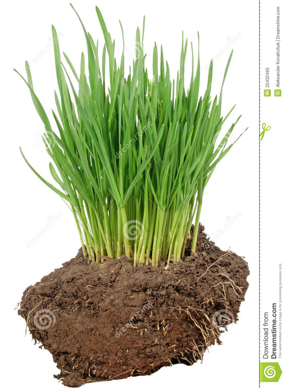 Green grass and soil stock photos image 22432493 for Soil and green