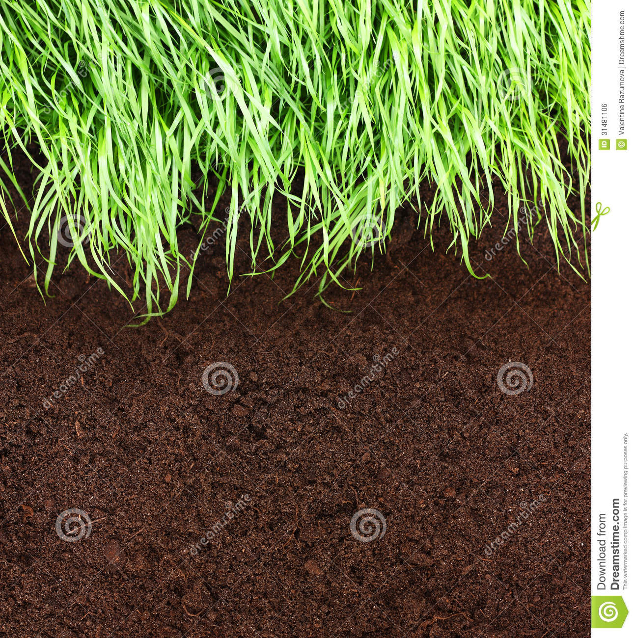 Green grass and soil royalty free stock image image for Soil and green