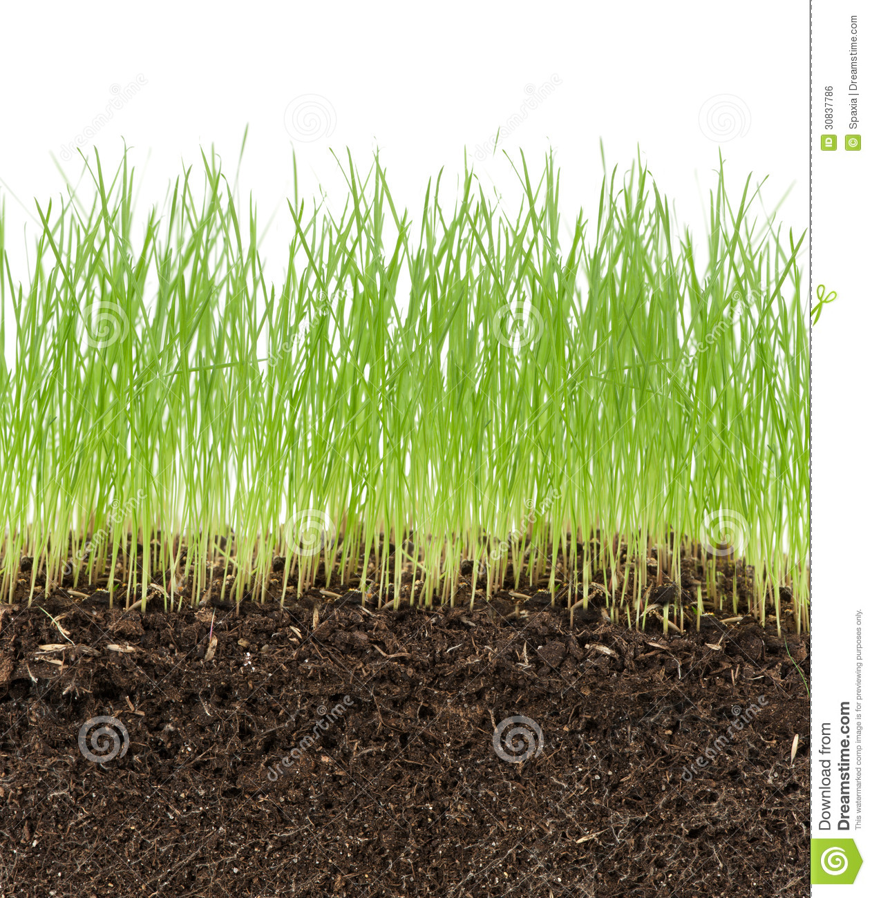 Green grass in soil stock photo image of season field for Soil and green