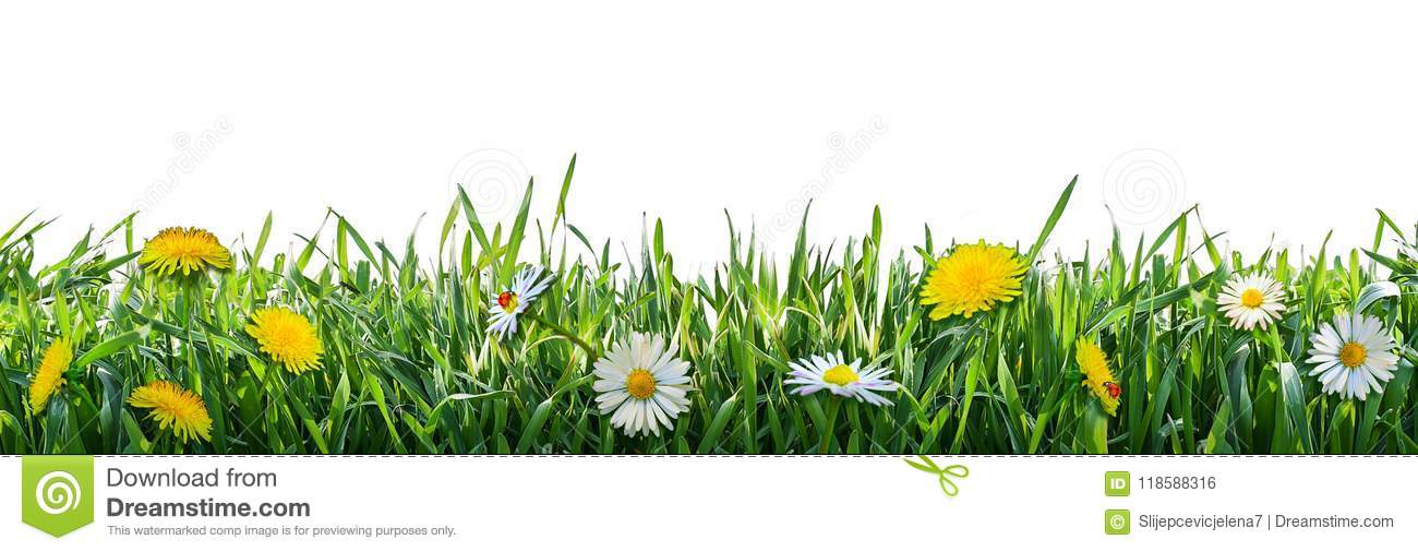 Green grass with flowers. Natural background