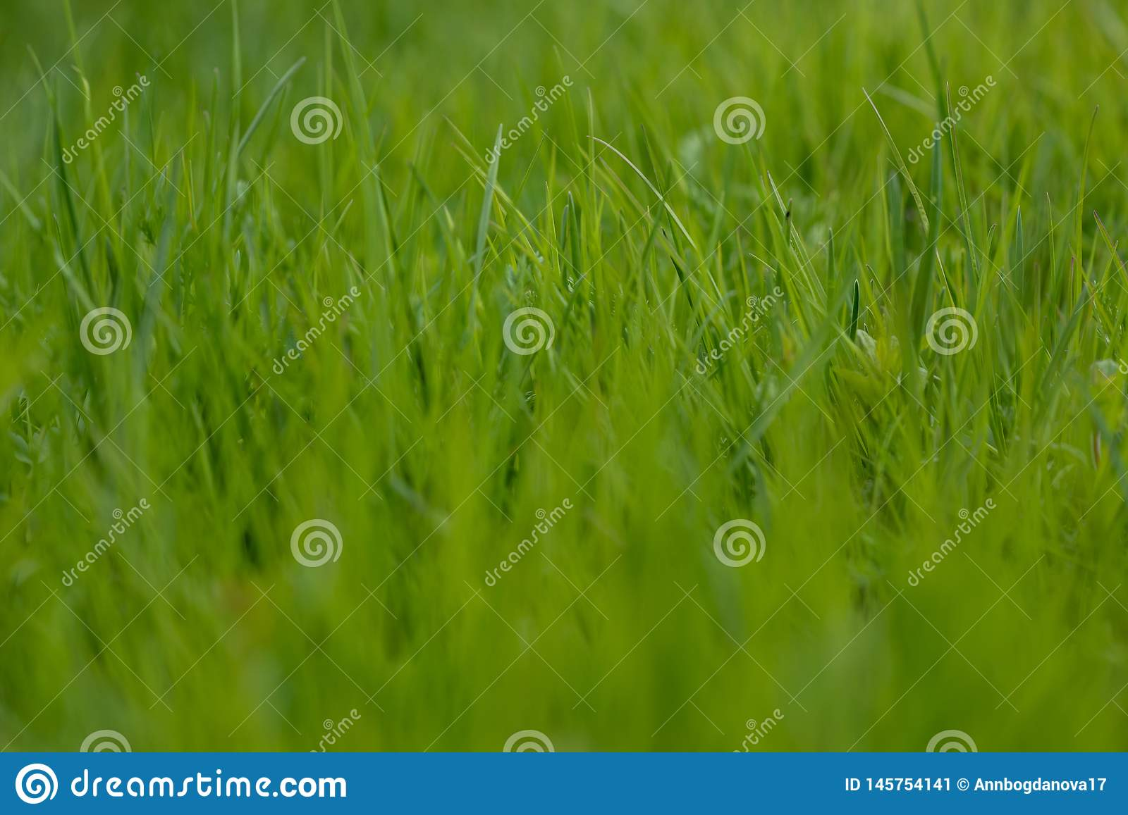 Green grass. the grass stirs from the wind. blurred background