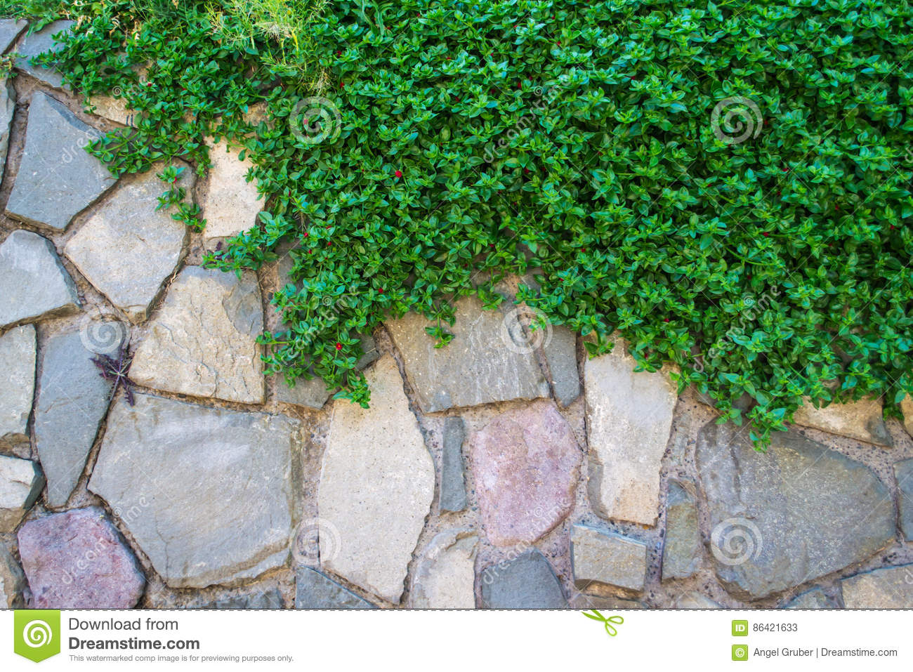 Green grass and stones wall