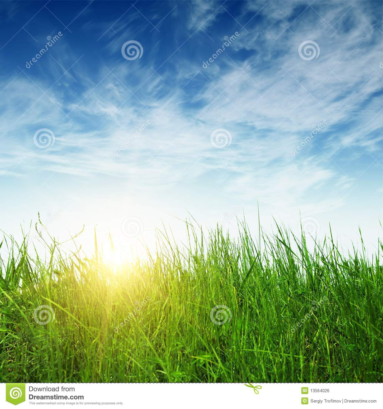 Green grass and sun rays stock photo. Image of grass ...