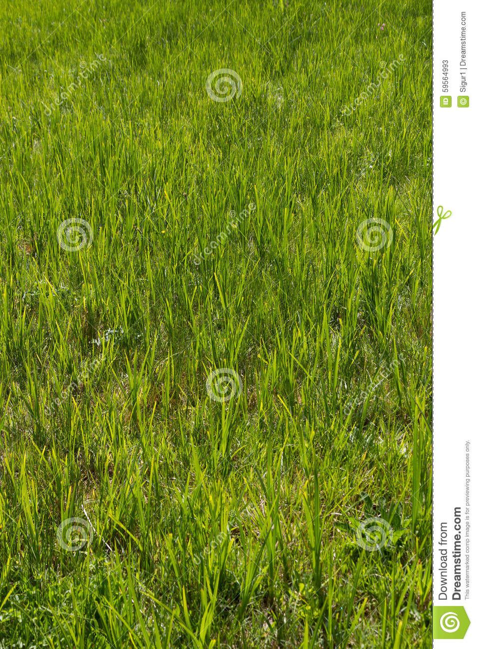natural wood meadow grass - photo #41