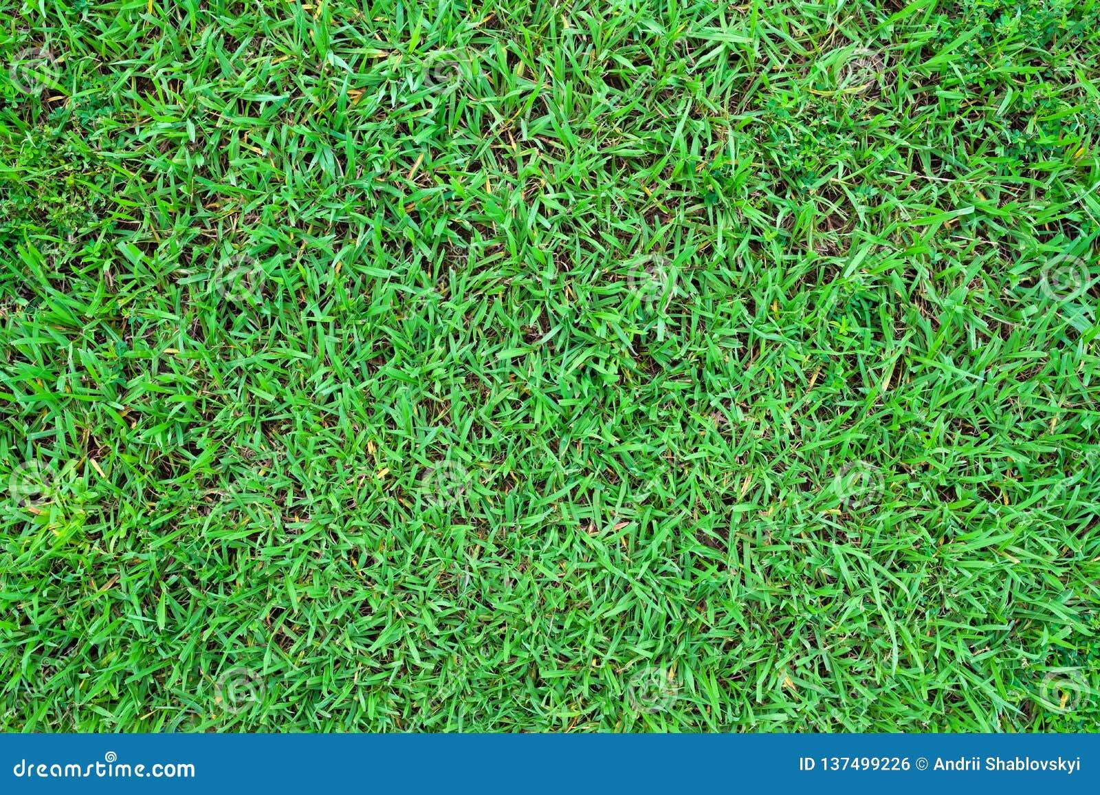 Green grass texture background. Top view