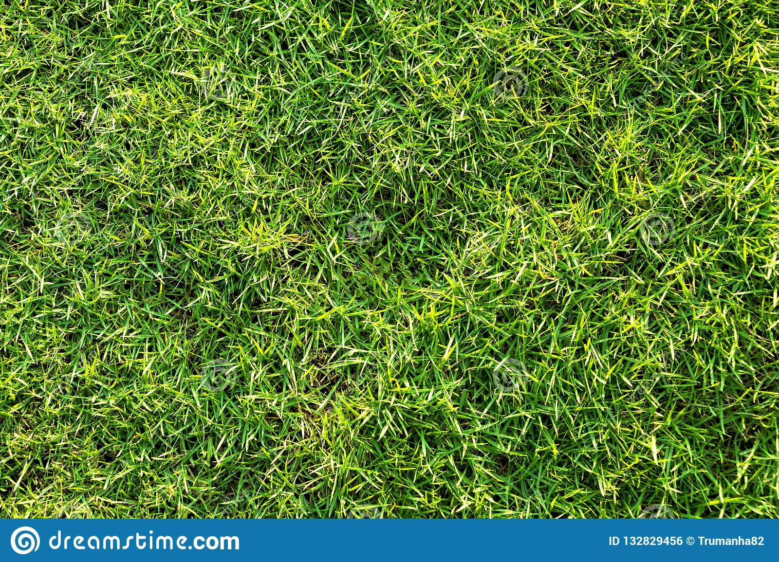 Green Grass Texture for A Natural Background