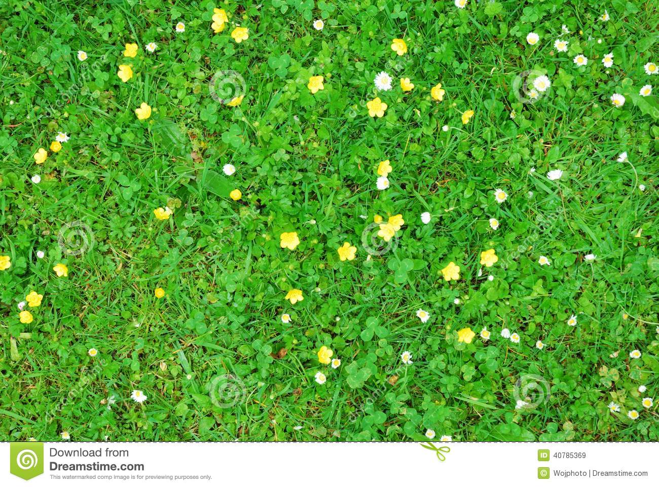 Green grass texture with white and yellow flowers