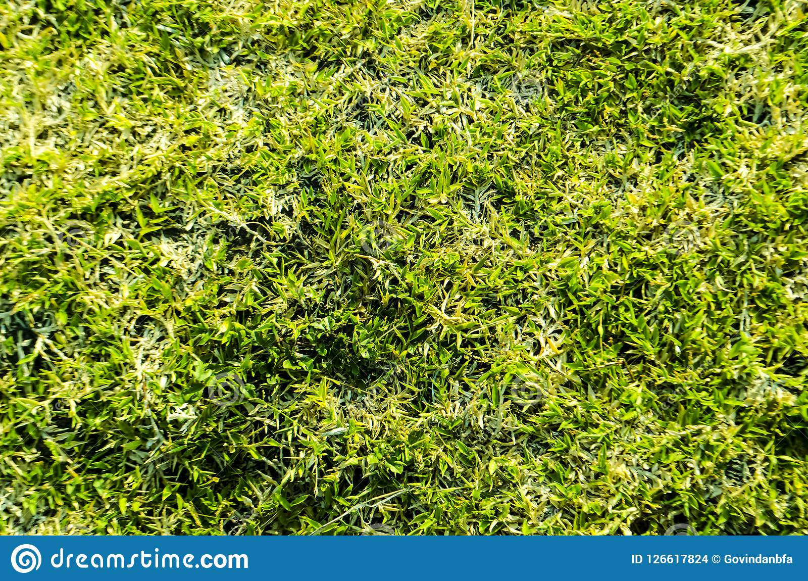 Green grass textured background and pattern from golf course