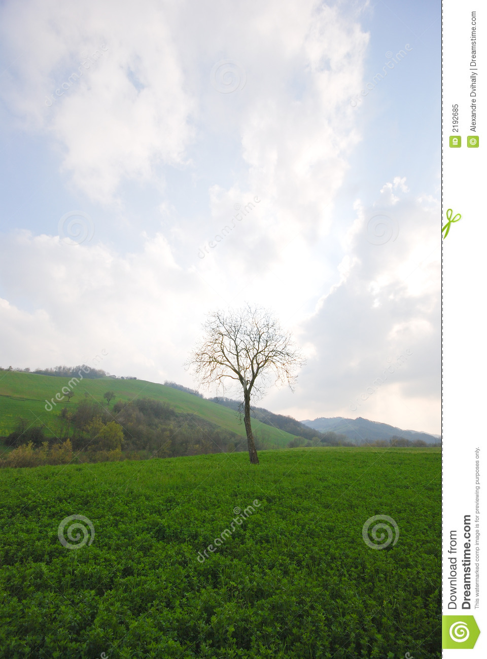 Green Grass Tree And Blue Sky Royalty Free Stock Photo ...