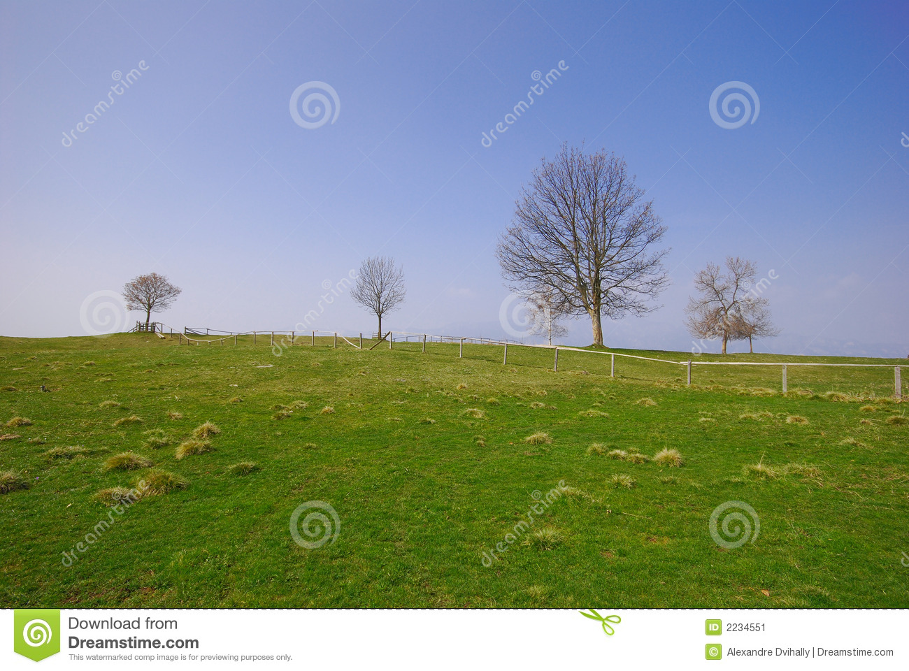 Green Grass And Tree Blue Sky Stock Image - Image: 2234551