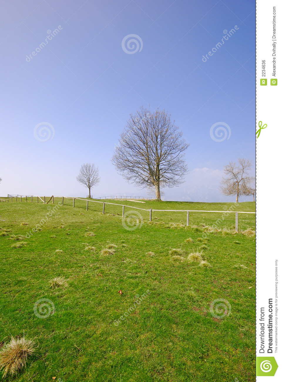 Green Grass And Tree Blue Sky Stock Photo - Image of green ...