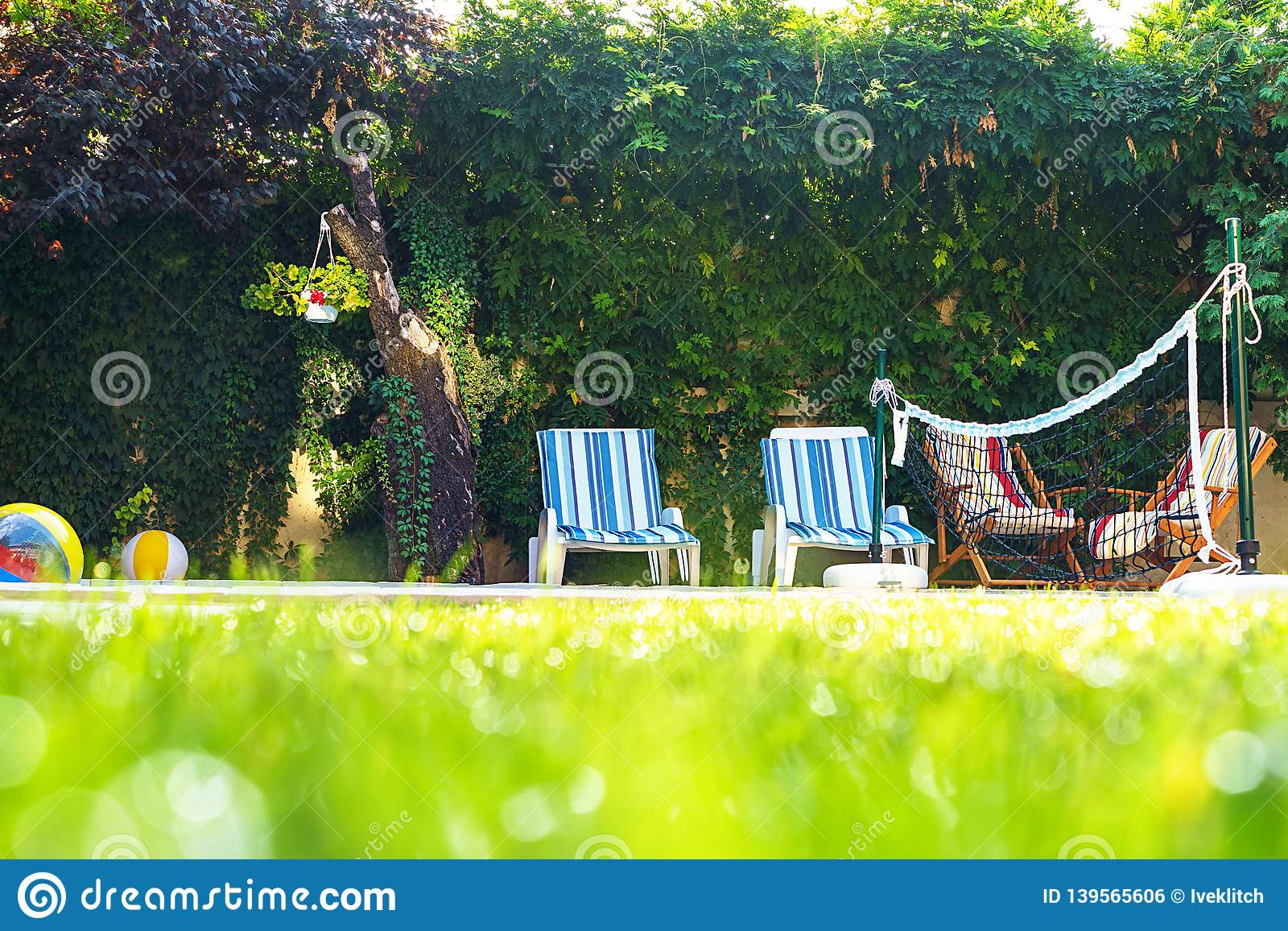 Green grass with water drops and green bokeh background on the yard with swimming pool and deck chairs for friends at garden party