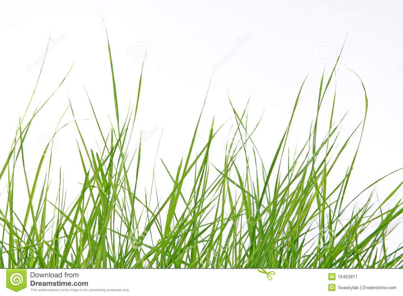 fresh green grass-18 | HD Wallpapers, HD images, HD Pictures