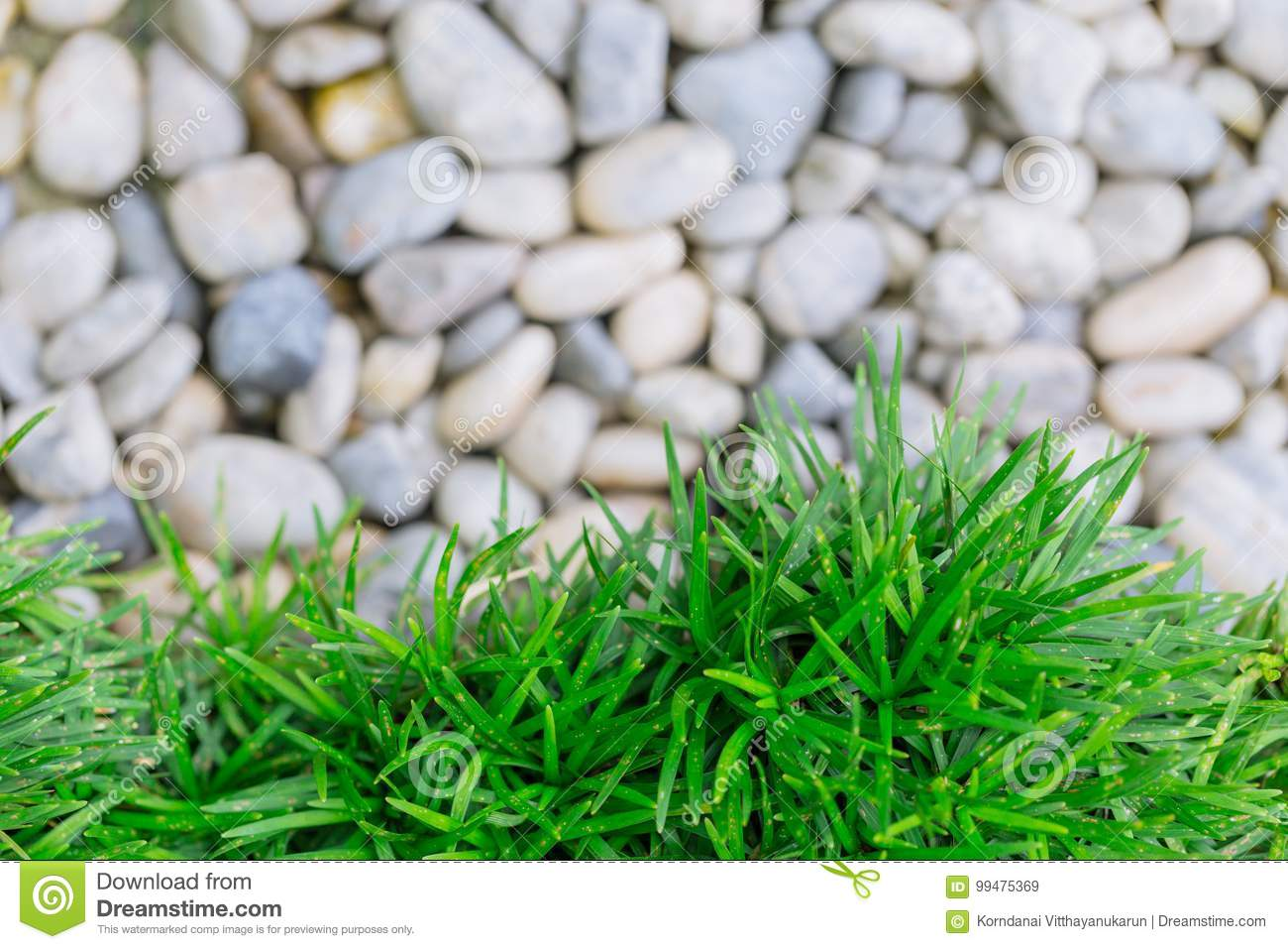Green grass with white stone