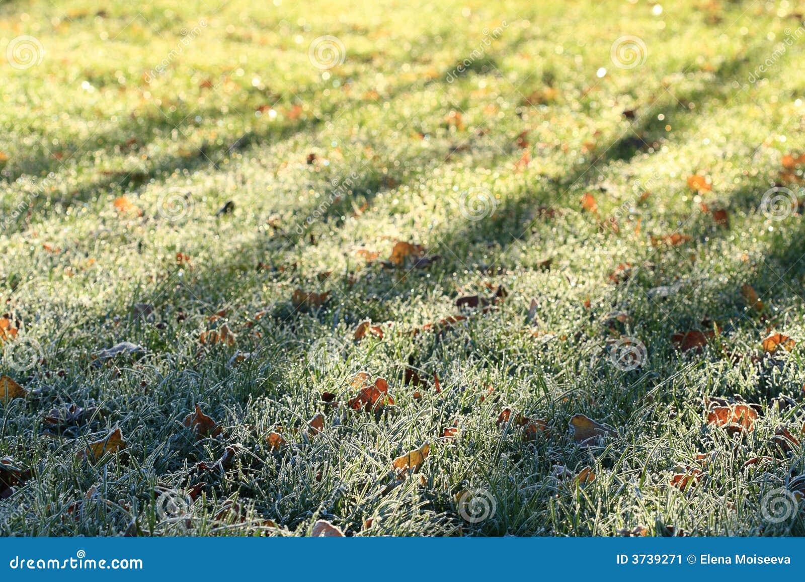 field grass green hoarfrost winter ...