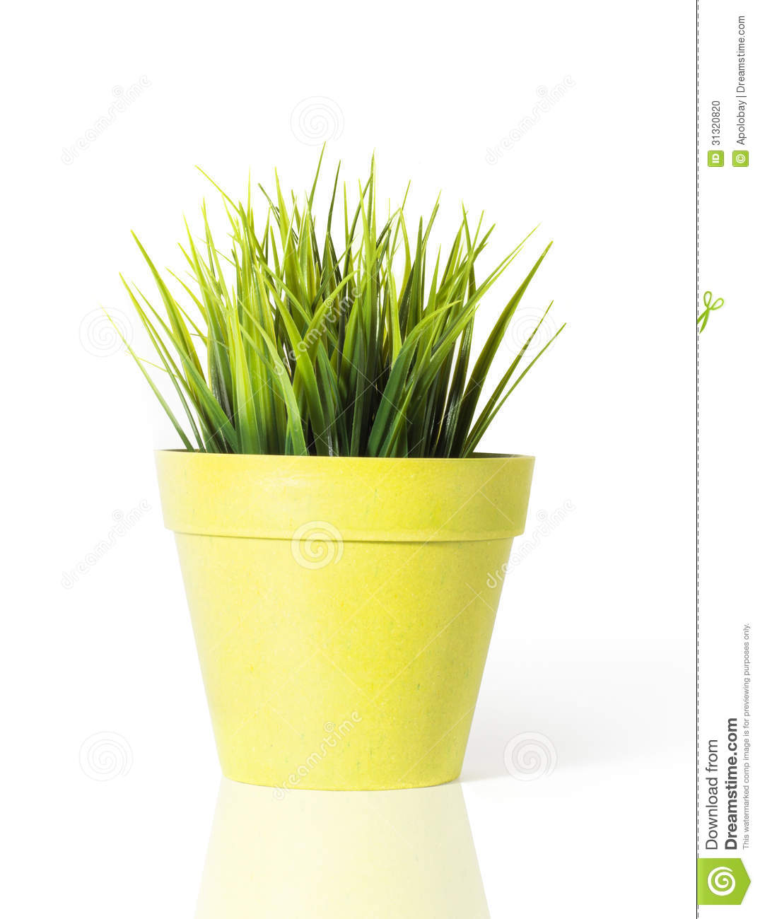 Green grass in a yellow flower pot isolated on white background green grass in a yellow flower pot isolated on white background mightylinksfo