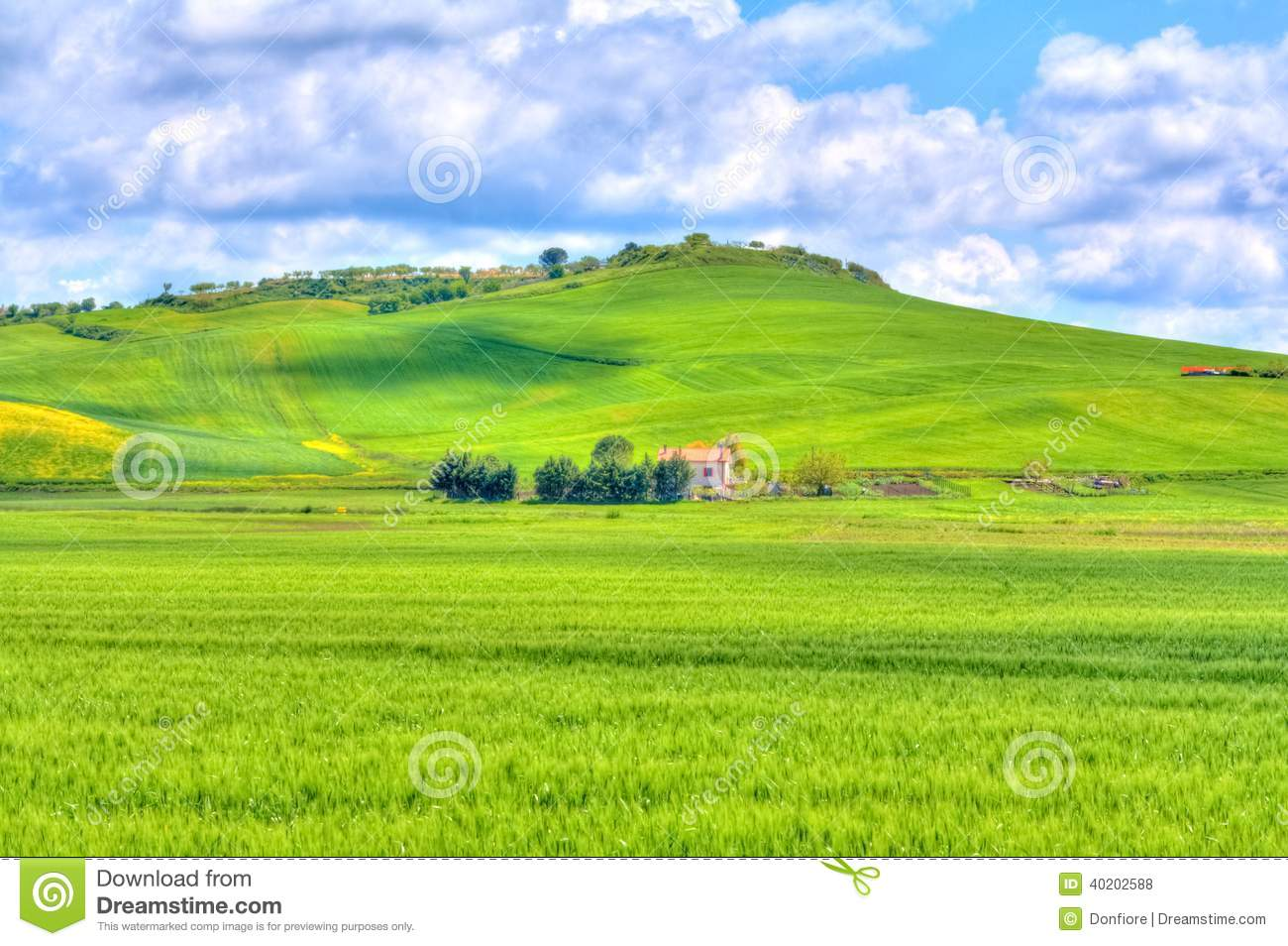 green grass blue sky flowers. Green Grass And Yellow Flowers Field Landscape Under Blue Sky Clouds. Growth, Color. D