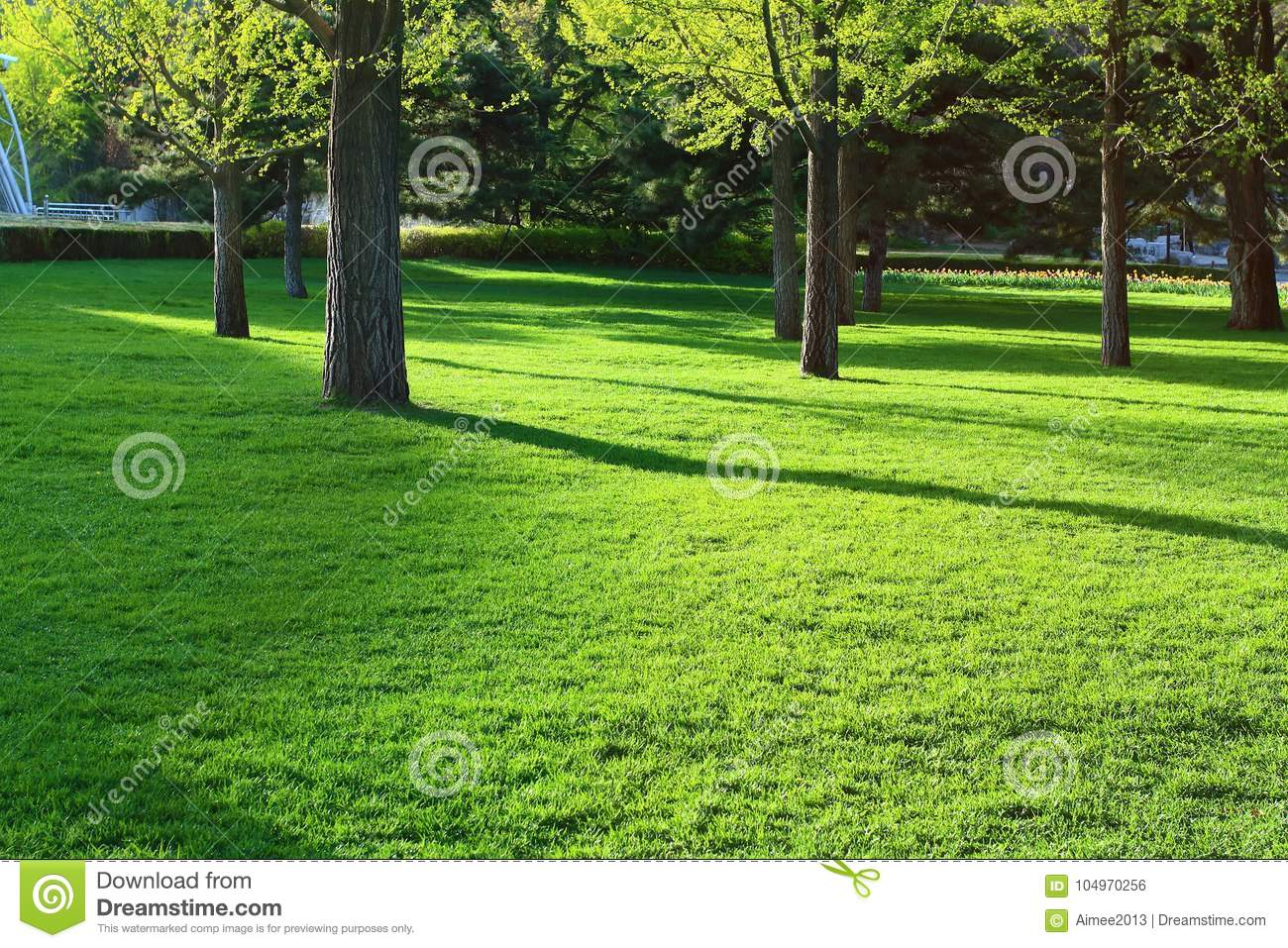 Green Grasses and Leaves