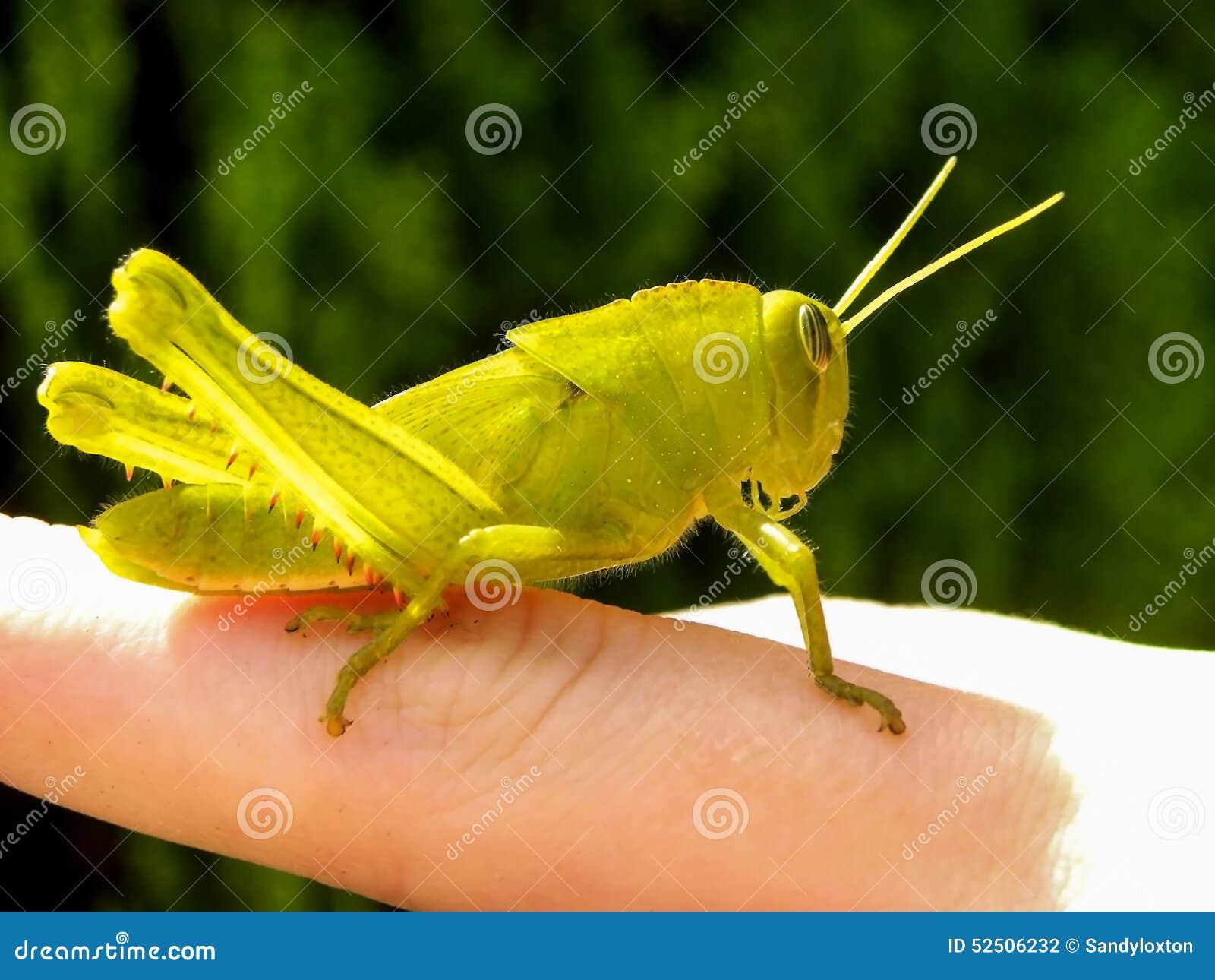 Grasshopper deals