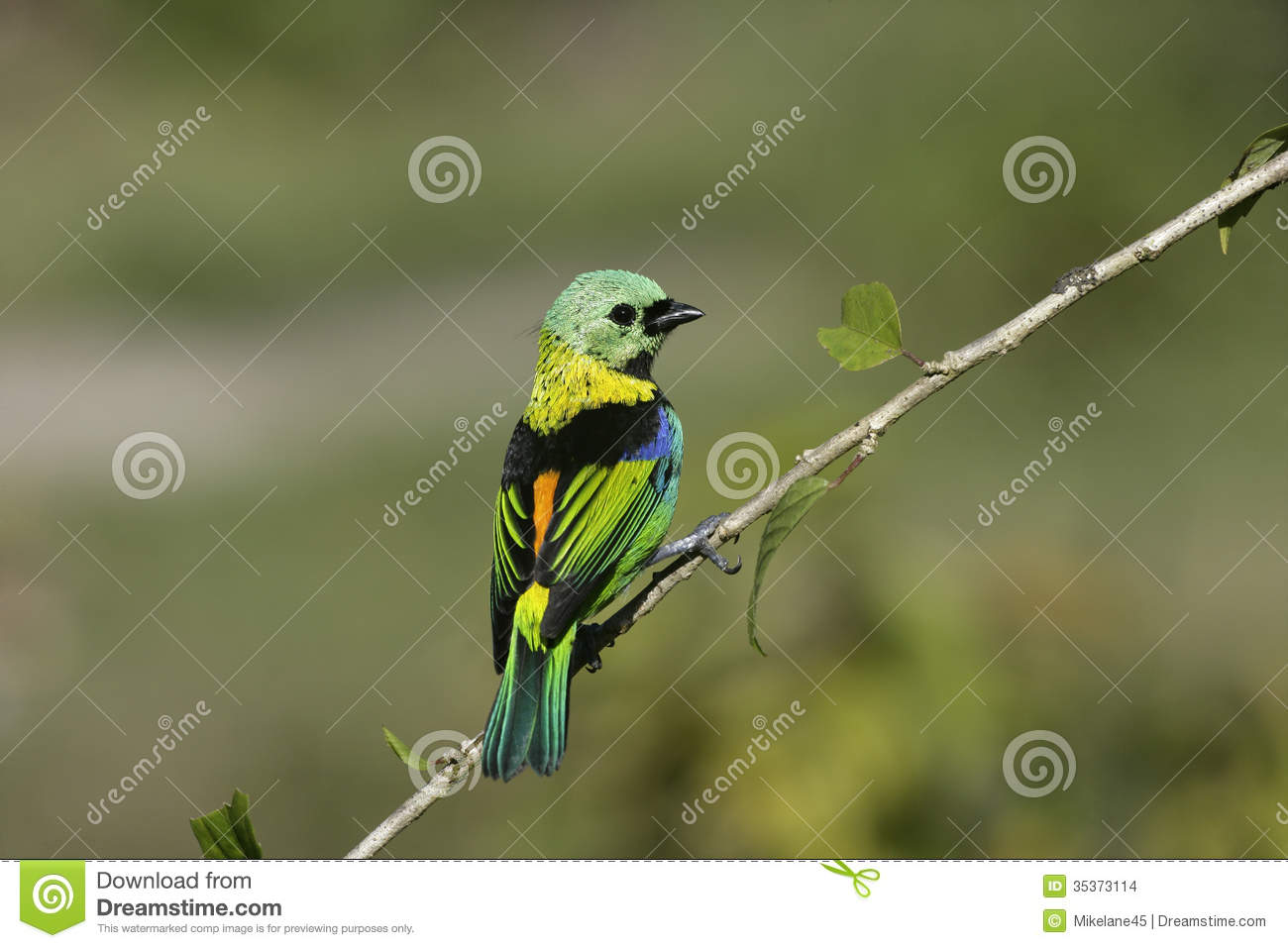 birds singles Greenwings wildlife holidays guided butterfly, botanical & birdwatching holidays give us a call - 01473 254658  birds of the gambia birds of lake kerkini in winter.