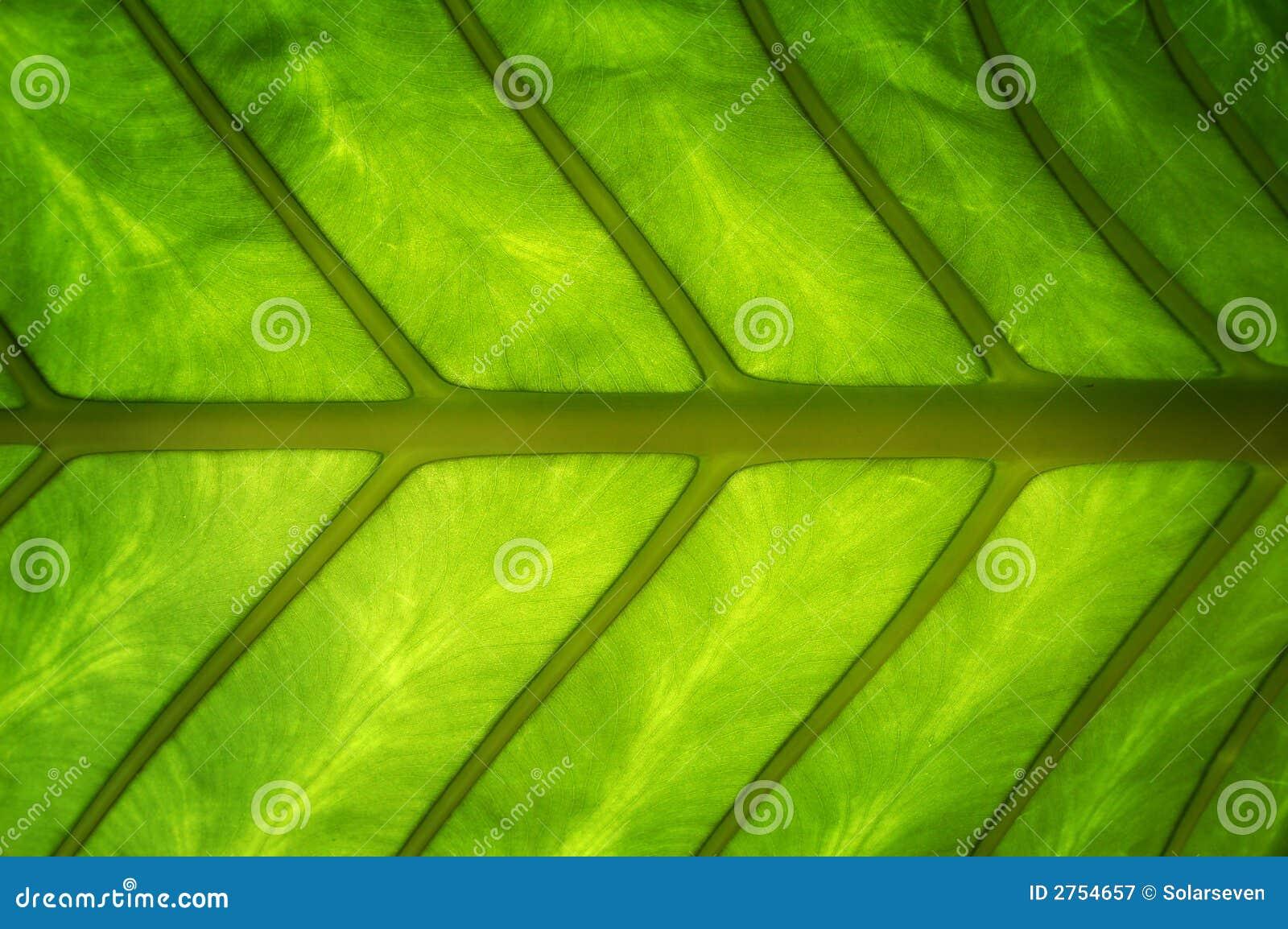 Green Healthy Leaf